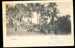 MOZAMBIQUE CHINDE / (Paysage) / - Mozambique