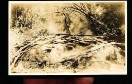 NOUVELLE ZELANDE DIVERS / Eagles Nest Geyser / - Nouvelle-Zélande