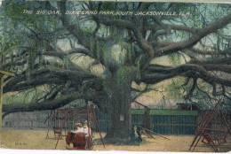 The Bog Oak Dixieland  Park South Jacksonville  FLa - Etats-Unis