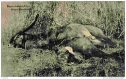 DEUTSCH-OSTAFRIKA-ERLEGTE        Wasserbucke-1907 - Tanzanie