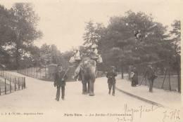 CPA Authentique  PARIS VECU  AU JARDIN D´ ACCLIMATATION Promenade Sur L´ ELEPHANT En 1904 Scan Dos - Artigianato Di Parigi