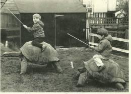 ANIMAL ANIMAUX TORTUE TORTUES  COURSE DE TORTUES TURTLE RACE  VOLLER ERNST EDIT. HUMOUR A LA CARTE ENFANT CHEVAUCHANT DE - Schildkröten