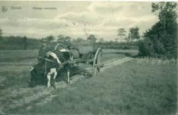Genk - Genck - Koe Met Kar - 1910 - Gelopen - Genk