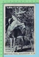 "Edmundston N.B. Canada (  Photo Montage "" A Buck It´s No Bull"" )  Carte Postale 2 Scan - Photographie"