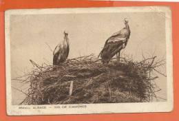 Z053, Alsace, Nid De Cigognes, Cigogne, 852, Circulée 1930 - Vogels