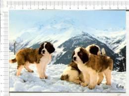 LA ROSIERE MONTVALEZAN - Elevage Du RELAIS Du PETIT ST BERNARD  -  Chiots - Hunde