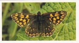 Grandee Vintage Cigarette Card British Butterflies 1984 No 16 Duke Of Burgundy Fritillary - Player's