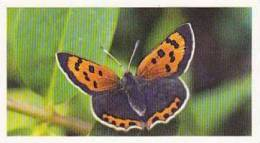 Grandee Vintage Cigarette Card British Butterflies 1984 No 21 Small Copper - Player's