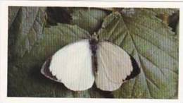 Grandee Vintage Cigarette Card British Butterflies 1984 No 26 Large White - Player's