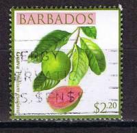 Barbados , Michel # O Guave - Fruits