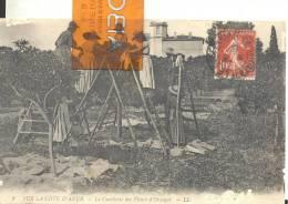 SUR LA COTE D'AZUR - La Cueillette Des Fleurs D'Oranger , Trace D'usure Par Endroit ( Voir Scan ) - Culturas
