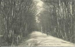Bethane ( Goé ) - Sous Bois De Bethane à La Gileppe - Cyclistes - 191? ( Voir Verso ) - Limbourg