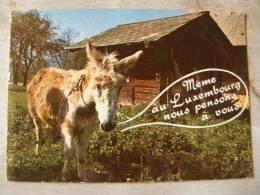 Donkey Ane Esel - Meme Au Luxembourg ...  D104378 - Burros
