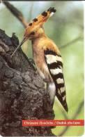 TARJETA DE ESLOVAQUIA DE UNA ABUBILLA  (BIRD-PAJARO) PU-PUT - Eslovaquia