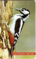 TARJETA DE ESLOVAQUIA DE UN PAJARO CARPINTERO  (BIRD-PAJARO) - Eslovaquia