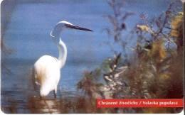 TARJETA DE ESLOVAQUIA DE UNA GARZA BLANCA  (BIRD-PAJARO) - Eslovaquia