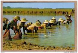THAILANDE - CPM - 829 - Pêcheurs Et Pêcheuses THAI - éditeur PHATANA LTD ? - Thaïlande