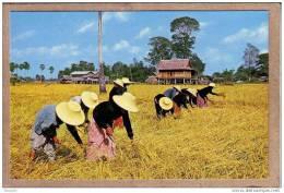 THAILANDE - CPM - 358 - Les Fermiers THAI Dans Un Champ De Riz - Thai Farmers On The Rice Fields - éditeur THAI SILPA - Thaïlande