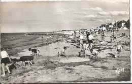 CARTE POSTALE PETIT FORMAT PHOTO ORIGINALE DENTELEE : COURSEULLES SUR MER ; LA PLAGE ; CALVADOS (14) - Other Municipalities