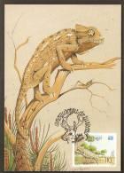 Portugal 1991 Caméléon Carte Maximum Portugal Chameleon 1991 Maxicard - Reptiles & Batraciens