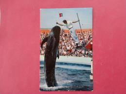 Marineland CA----- Bimbo The Whale   Not  Mailed     Ref 933 - Fish & Shellfish