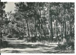 Saint Brévin L´océan Un Sous Bois - Saint-Brevin-les-Pins