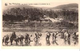 """Iles Philippines-Les Femmes Igorottes Dans La Plantation De Riz-Edit.: Nels Pour Les """"Missions De Scheut"""" - Philippines"""