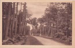 Cpa BAUD - En Forêt De Camors - Baud
