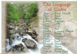 Wales Postcard - The Language Of  Wales   SL 2528 - Wales