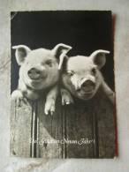 Pig Pigs D104435 - Cochons