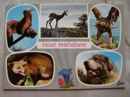 Faune Pyrénéenne  Dog Fox Squirrel Eagle  D104439 - Animaux & Faune