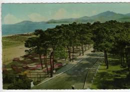 66 - Argeles-plage - Bord De Mer - Au Fond Les Alberes - Edition Larrey - 1956 - Argeles Sur Mer