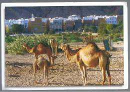 POSTAL - CARTE POSTALE - YEMEN - Camellos Shibam - Yemen