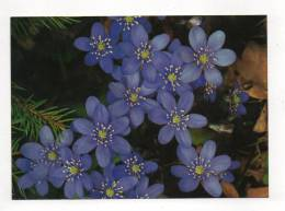 Anemone Hépatica - Fleurs, Plantes & Arbres