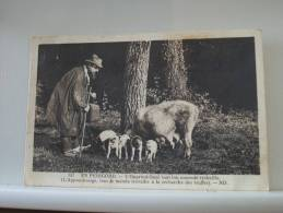 24 EN PERIGORD - L'OPPRINTICHAZE TOUT LOU MONDE TROBAILLO (RECHERCHE DES TRUFFES - 1936 (EDITIONS ND PARIS N°157) - Altri Comuni
