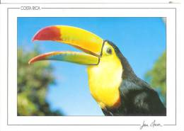 COSTA RICA - Toucan - Costa Rica