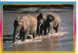 ELEPHANT - African Wildlife - Éléphants