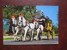 Bad Kissingen Pferd Horse And Carriage Caballo Cavallo E Carrozza Coche De Caballos Cheval Et En Voiture - Horses