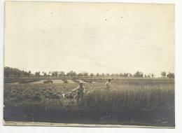 Ancienne Photo De Loverval Moisson à La Main( Charleroi, Chatelet) - Charleroi