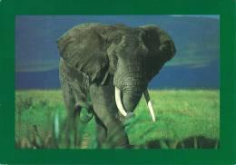 WILD TANZANIA.  Strolling Elephant In The Ngorongoro Crater. - Éléphants