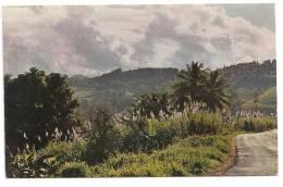 Martinique -Matinée Sous Les Tropiques--(Réf.4276) - Martinique