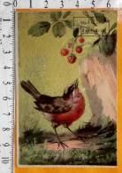 Chromo Fin 19 / Chocolat Compagnie Francaise / Ticket Tompbola / Oiseau Rouge Gorge - Autres