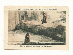 Image, Parc Zoologique De Vincennes, 80 - Magots Sur Leur Ile (Algérie) - Vieux Papiers