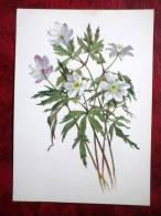Windflower - Anemone Nemorosa - Flowers - 1986 - Russia - USSR - Unused - Fleurs, Plantes & Arbres