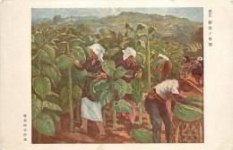 Réf : E -13-290 : Culture Du Tabac - Chine