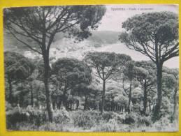 SPOTORNO - PINETA E PANORAMA 1939 - Savona