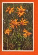 1 Cpa Fleurs Arnica Montana - Non Classés