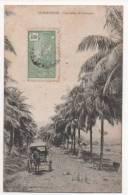 GUADELOUPE - Une Allée De Cocotiers - Guadeloupe