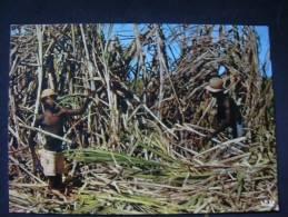 HAITI COUPE DE CANNE IRIS 6575 - Haiti