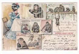 CIRCUS - Zirkus Barnum And Bailey Limited, Litho, Year 1901, Monkeys - Circus